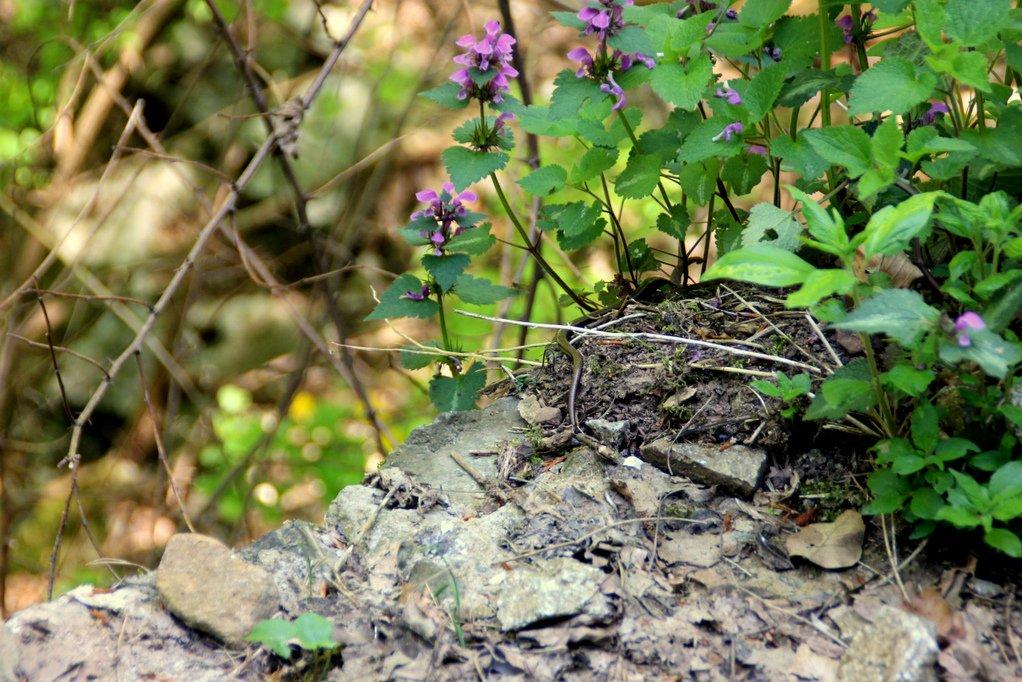 BUCKET LIST & COLUMN   Wilde slangen spotten met Servische vrouwen