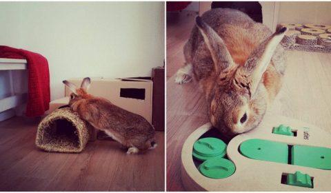 konijnen-speelgoed